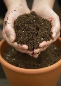 азалия почва удобрения